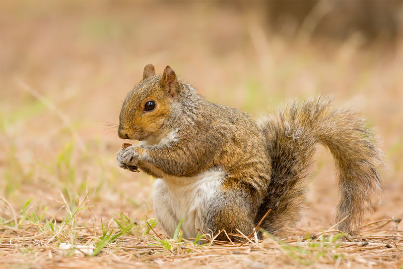 Squirrel_MG_2472